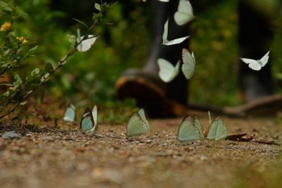 retornan-mariposas